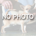 thumb_NOPHOTO