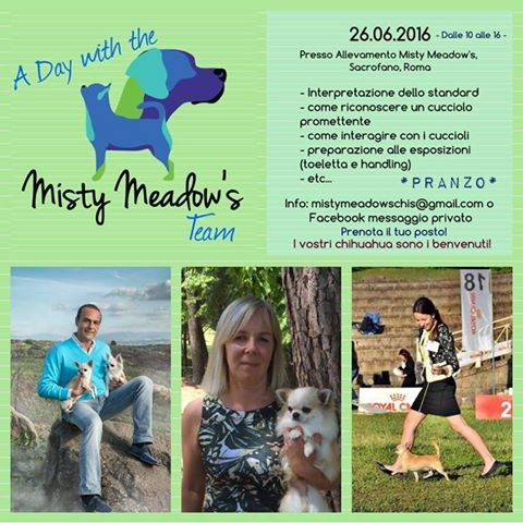Chihuahua Day da Misty Meadow's 26.6.2016