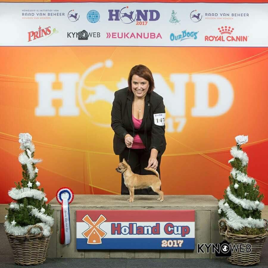 IDS Holland Cup