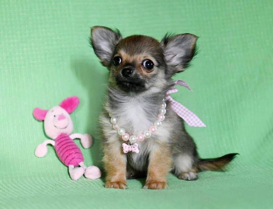 Per chi cerca un cucciolo da compagnia