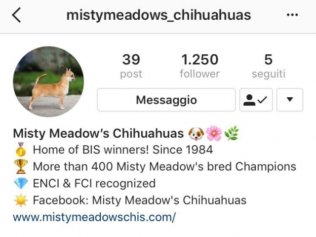 Misty Meadows on Instagram!